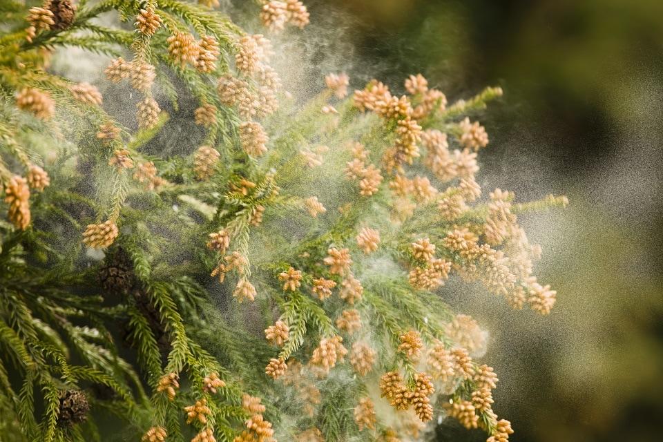 「花粉」の画像検索結果